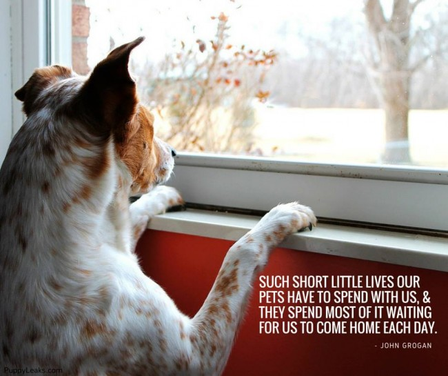 60 Of The Best Dog Inspired Quotes Puppy Leaks Simple Quotes About Dog Friendship