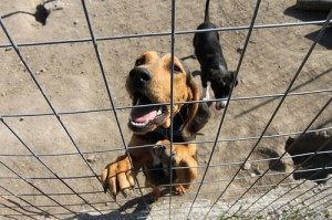 New Study Finds That Dogs Might Find Kennels Exciting