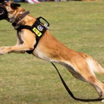 Police Celebrate Opening of New K9 Kennel