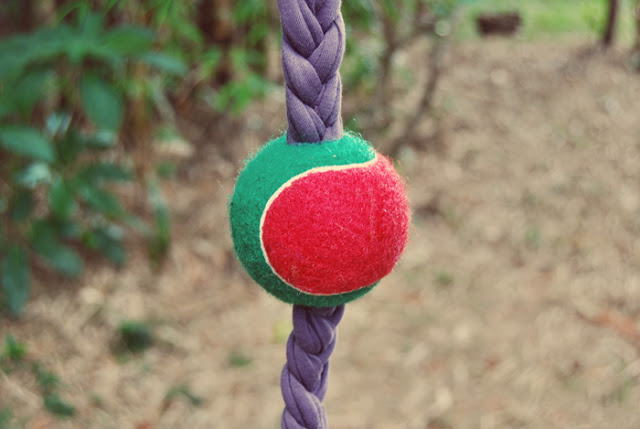 10 Easy to Make DIY Dog Toys - Puppy Leaks