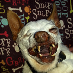 World S Ugliest Dog Contest 2014 Puppy Leaks