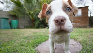 5 Tips for Socializing Your Puppy
