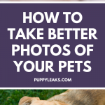 How to take better photos of your dog