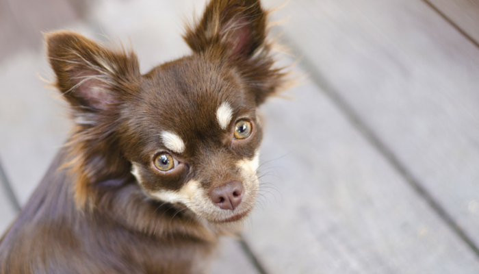 28 Interesting Facts About Dogs