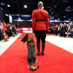 Slain Mounties Police Dog to Stay on RCMP