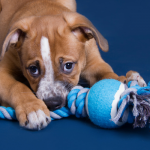 10 Easy to Make DIY Dog Toys