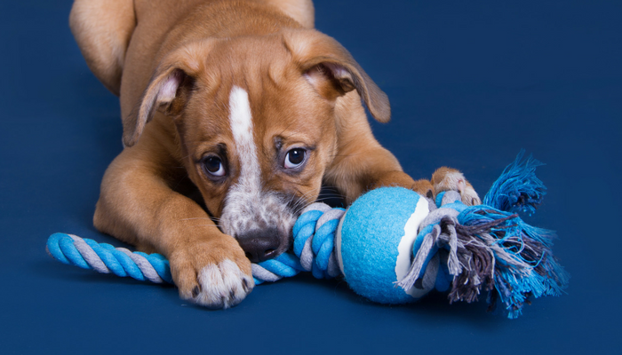 5 Easy DIY Dog Toys
