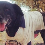 Happy Tails – Weekly Pup Report