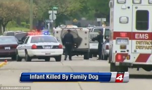 Dog Kills Infant in Michigan