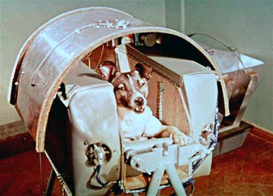Laika The Dog Was the First Mammal to Orbit Earth in 1957