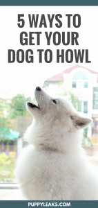 How to make your dog howl. How to train your dog to howl on command, and videos guaranteed to make your dog howl.