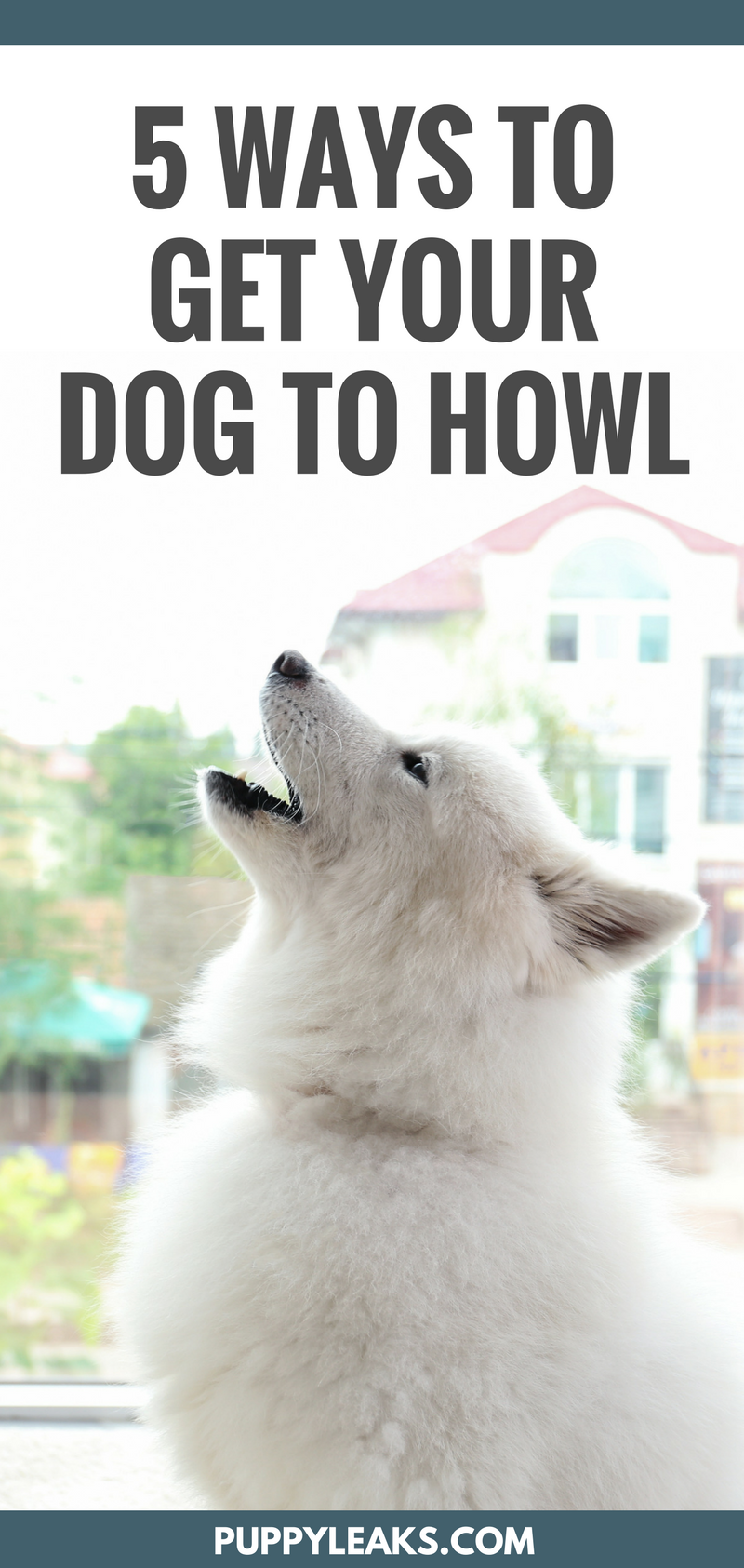 How To Make A Dog Howl On Command