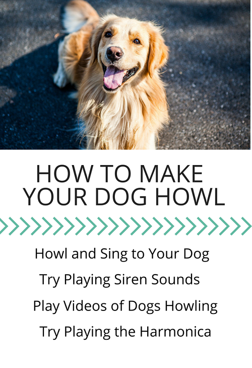Make Your Dog Howl