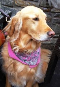lost dog murphy