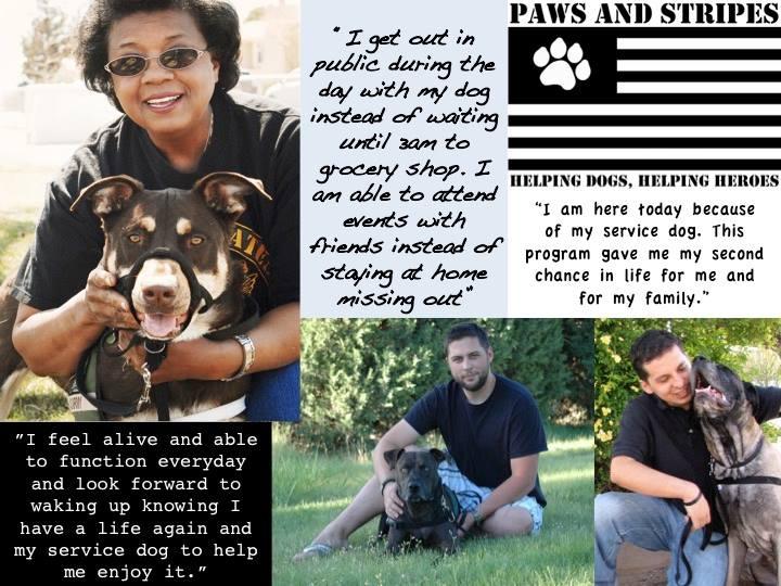 ptsd service dogs