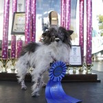 World's Ugliest Dog Contest 2014
