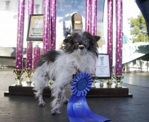 World's Ugliest Dog Contest 2014