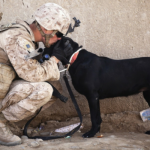 PTSD Service dog clinical research underway