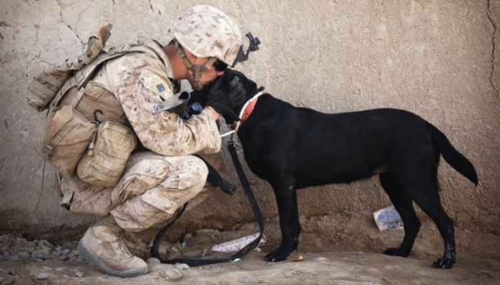 Clinical research underway on PTSD service dogs