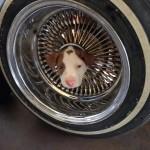Puppy Gets Head Stuck In Wheel