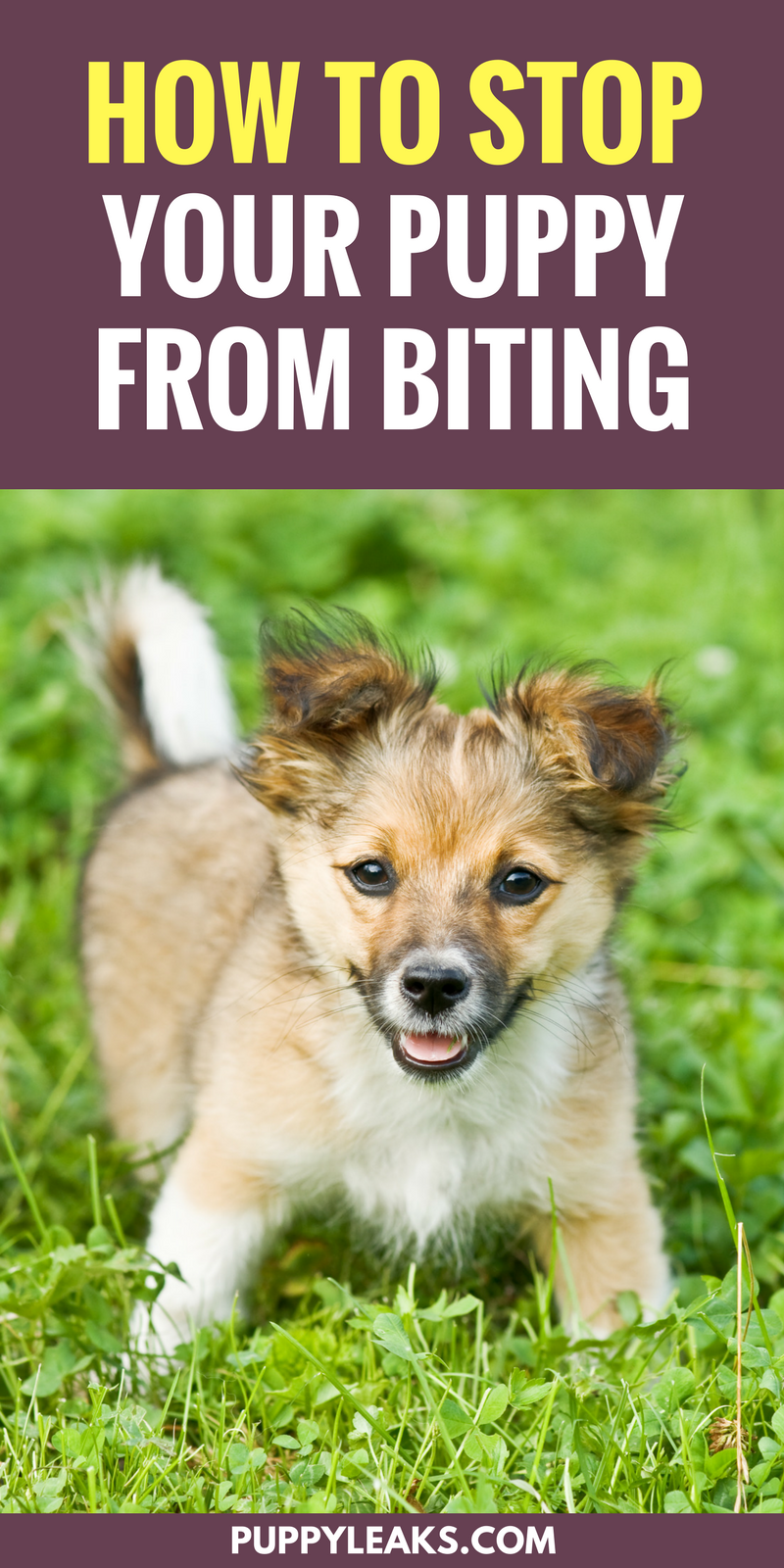 Want to stop your puppy from biting everything? Here's 3 methods that will teach your puppy to stop biting your hands and everything else they come into contact with.