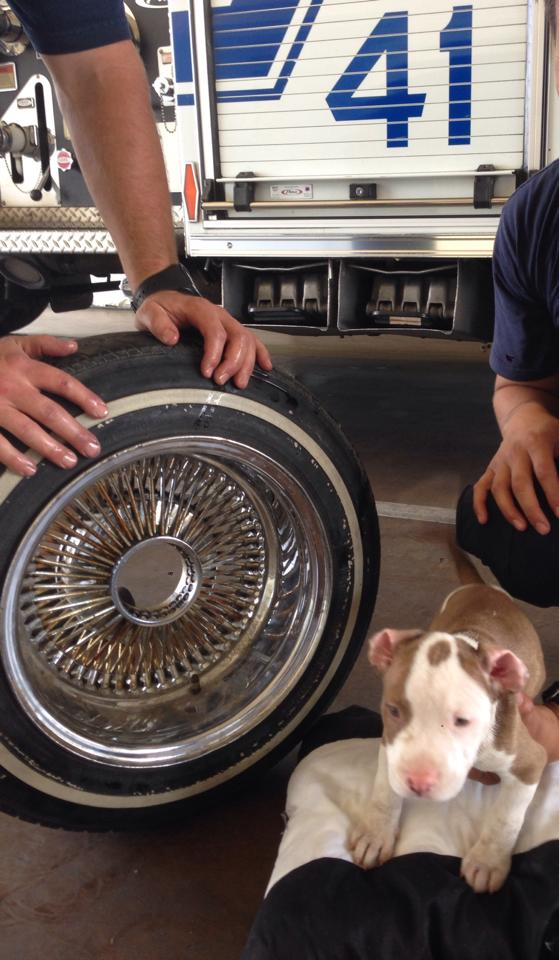 puppy gets head stuck in wheel