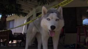 Dog Finds Human Skull in Backyard