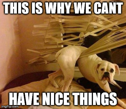 Can't Have Nice Things Dog Meme