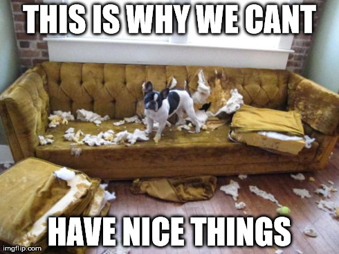 9de6ac37f 11 Dog Memes: This is Why We Can't Have Nice Things - Puppy Leaks