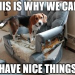 This is Why We Can't Have Nice Things – Dog Memes