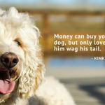 75 of My Favorite Dog Inspired Quotes