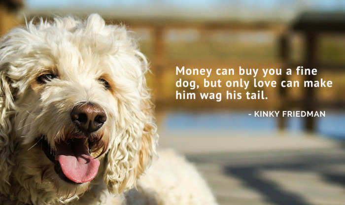 60 Of The Best Dog Inspired Quotes Puppy Leaks Classy Quotes About Dog Friendship