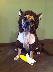 diy dog treat