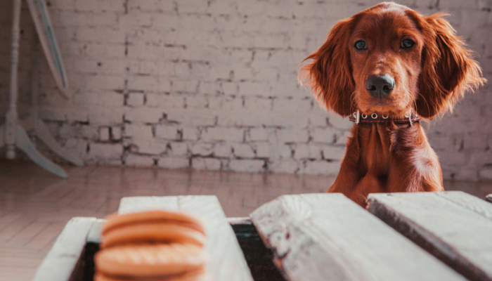 3 Easy Ways to Stop Your Dog From Begging