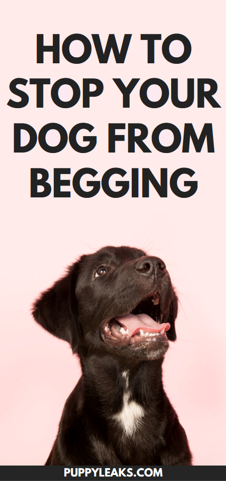 Tips to stop your dog from begging