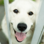 8 Ways To Help Shelter Animals Without Adopting