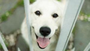 Help Shelter Animals Without Adopting