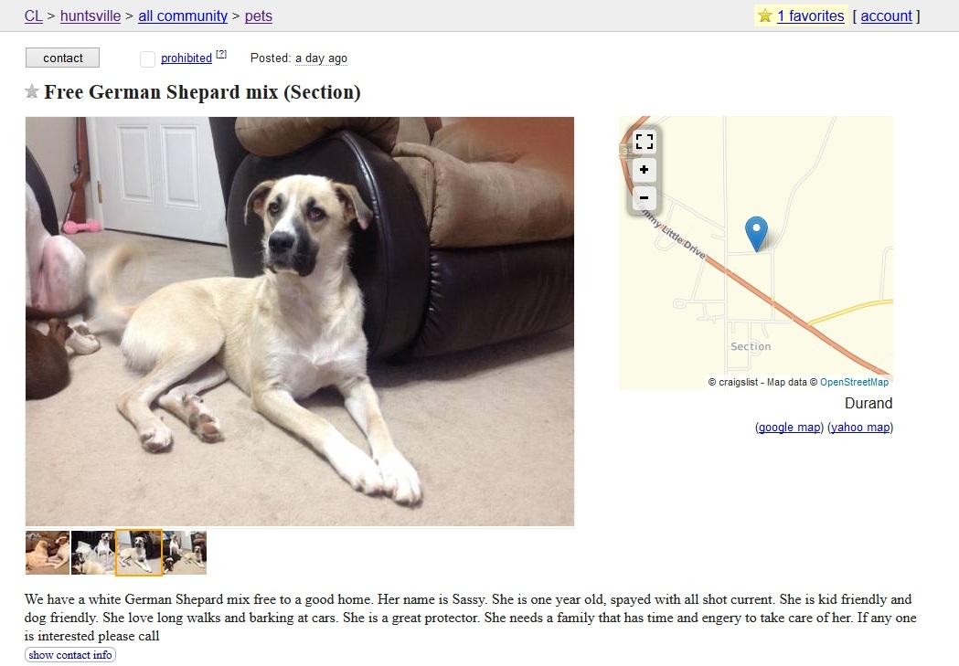 Craigslist Dog Ads: Buyer Beware - Puppy Leaks