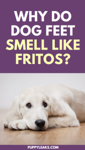 Why do dog feet smell like fritos