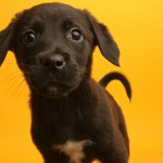 Help Animal Shelters Without Leaving Home