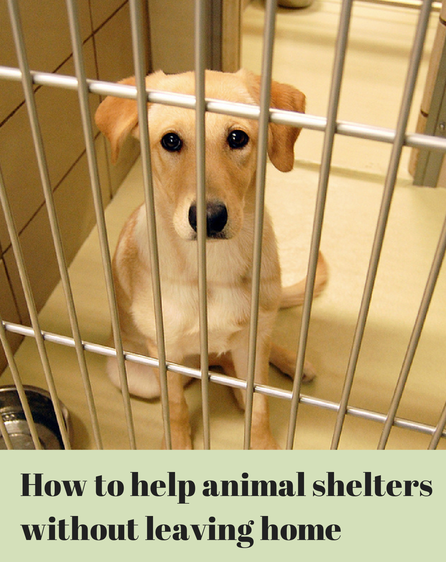 help animal shelters