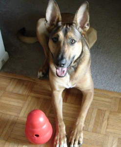 laika and her kong