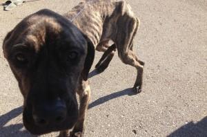 dog found in lansing