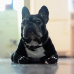 Good Old Boy – Senior Dog Photos