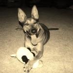 Los perros más felices de Flickr