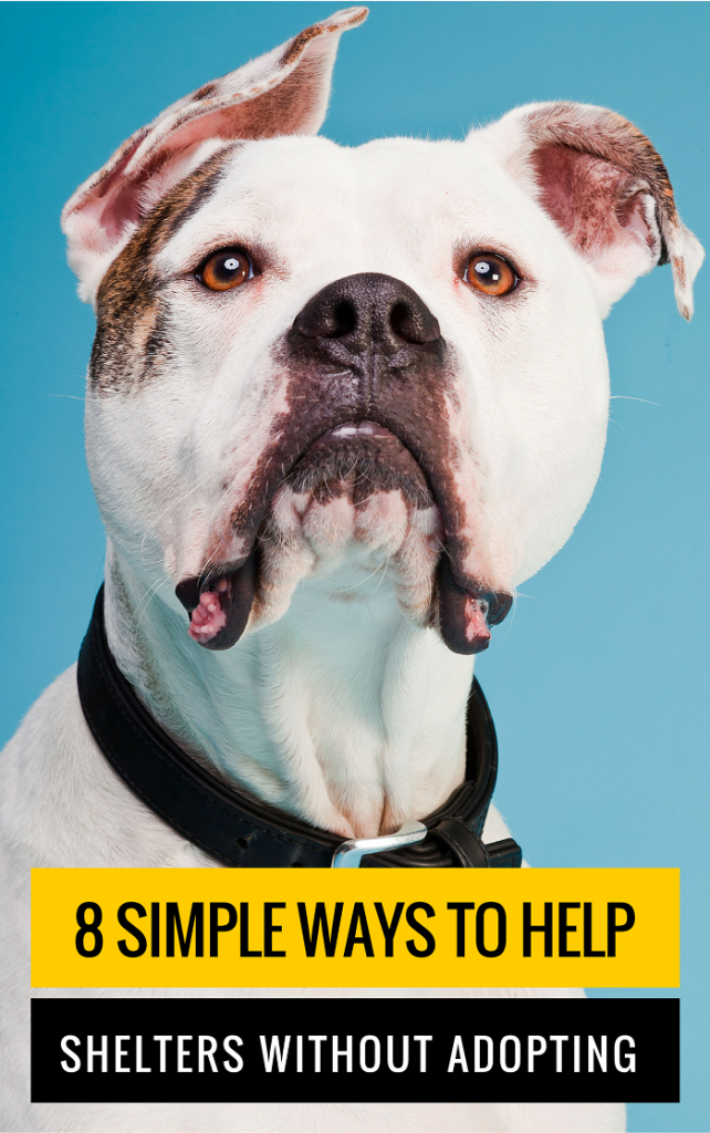 8 Simple Ways to Help Animal Shelters Without Adopting