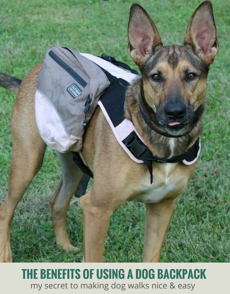 The Benefits of Using a Dog Backpack - The Kyjen Outward Hound Dog Backpack Review