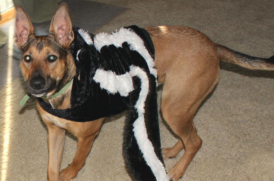 choose a dog costume