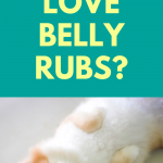 why do dogs love belly rubs