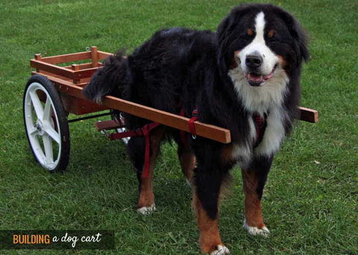 plans to build a dog cart
